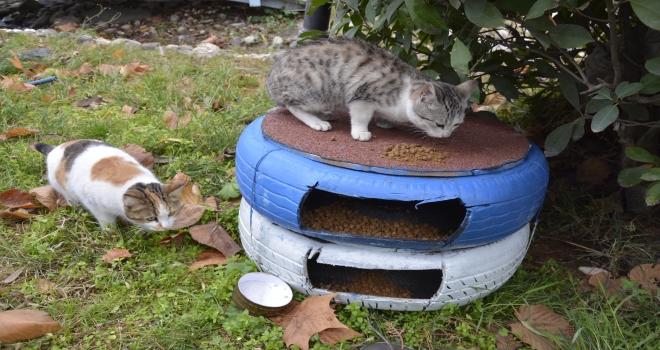 Siverek Belediyesi'nden Sokak kedilerine sıcak yuva
