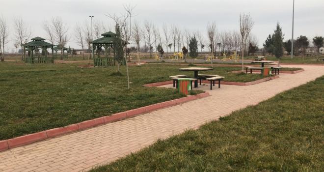 Suruç Belediyesi ağaçlandırma çalışması başlattı.