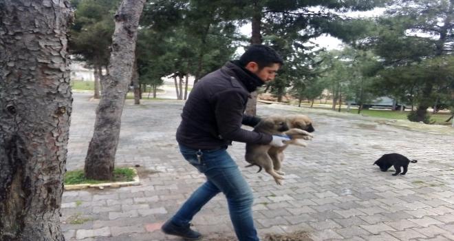 Soğukta Aç Ve Bakımsız Hayvanlara Şefkat Eli