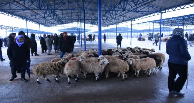 Yeni hayvan pazarında ilk gün heyecanı yaşandı