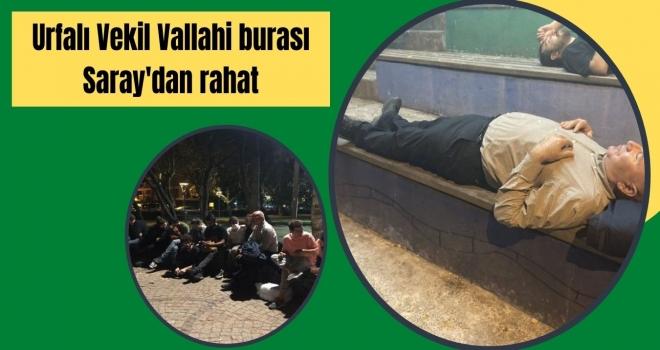 Urfalı Vekil Vallahi burası Saray'dan rahat