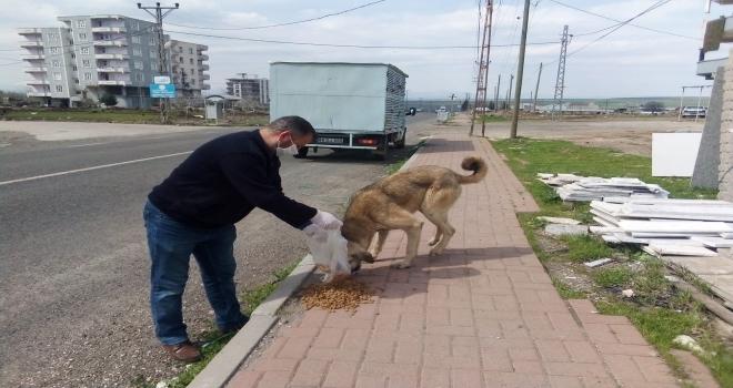 Siverek Belediyesi sokak hayvanlarını unutmadı