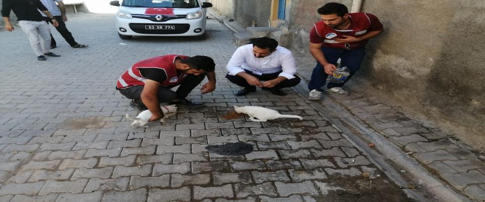 Ceylanpınar Belediyesi sokak hayvanlarını unutmadı
