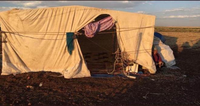 Çadırda yaşayan aileye Siverek Belediyesi sahip çıktı