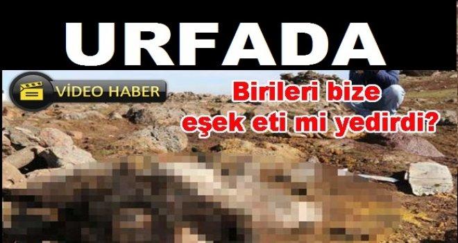 Urfa'da skandal olay